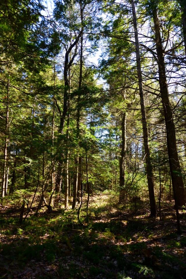 MWCC Forest.JPG